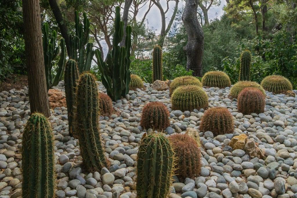 aménagement jardin exotique Bouches-du-Rhône, 13, Vaucluse, 84, Alpes de Haute Provence, 04