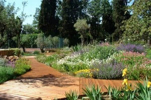 Aménagement d'une rocaille de vivaces et bassin d'agrément dans un jardin méditerranéen