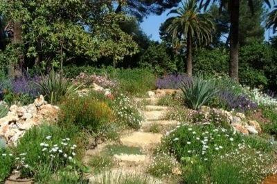 Aménagement d'un jardin méditerranéen